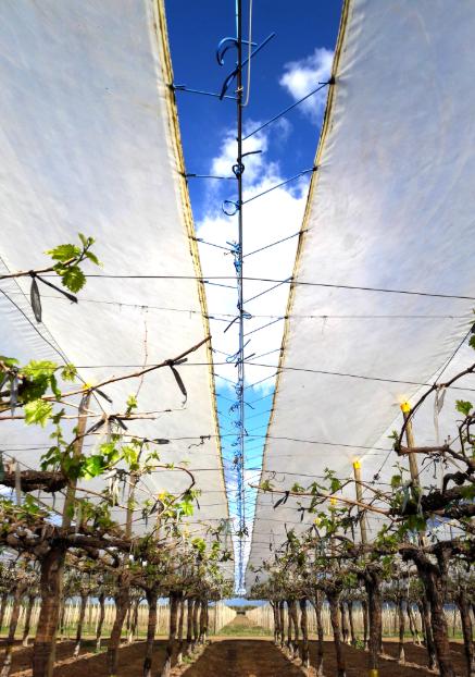 Los límites del agro y el uso de tecnología: entrevista con Víctor Grimblatt