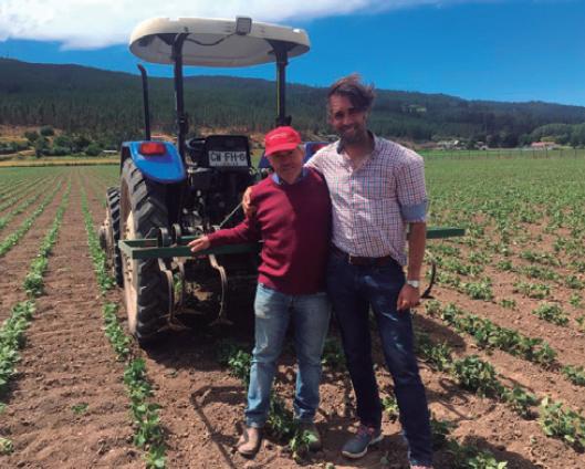 Todos ganan: la alianza que une a Tucapel con agricultores de poroto tórtola