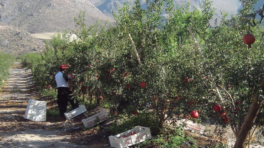 En busca de alternativas: tres cultivos de bajo requerimiento hídrico