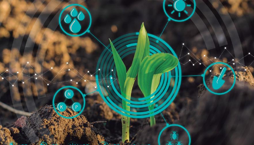 Mejorar la calidad del suelo: una estrategia de adaptación al cambio climático