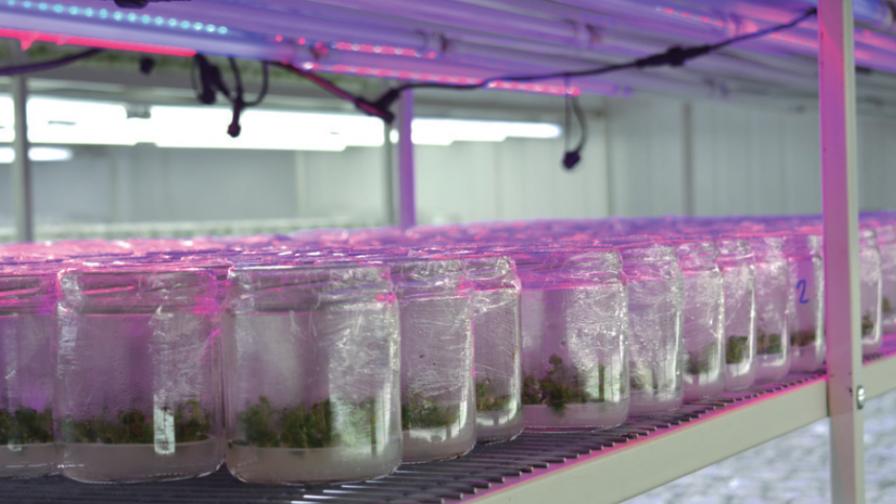 Garantía de futuro: la importancia de la investigación y desarrollo de la micro-propagación in-vitro en frutales