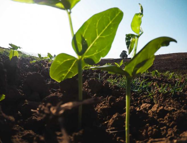 Proceed International y Agrimarine Terra: cumple dos años el programa de control de enfermedades fungosas en uva