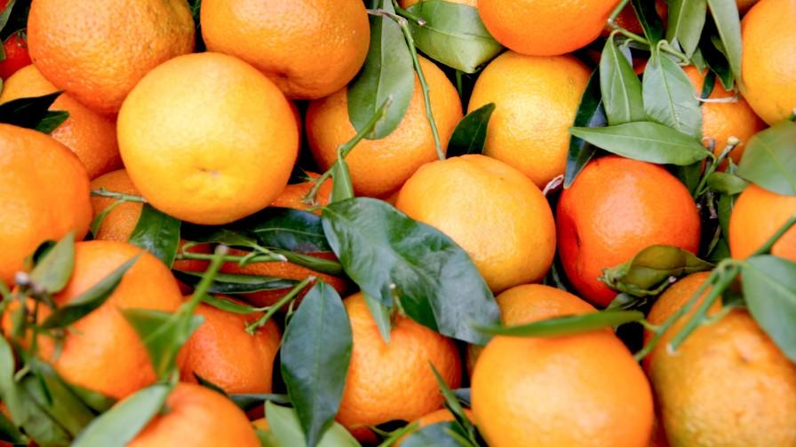 Clementinas son los primeros cítricos chilenos que se exportan a China