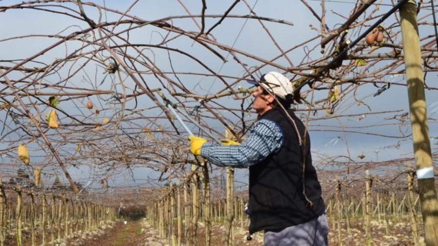 Claves para un correcto manejo de frutales de hoja caduca en invierno