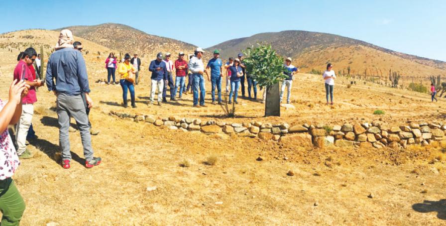 Complemento para el secano: un proyecto para desarrollar y diversificar la productividad del secano