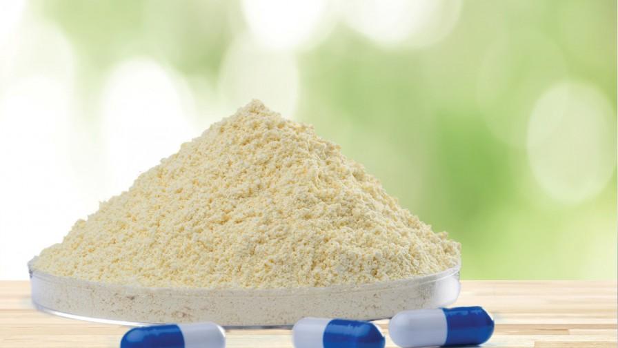 Proteína vegetal de alta calidad desde La Araucanía en la industria alimentaria