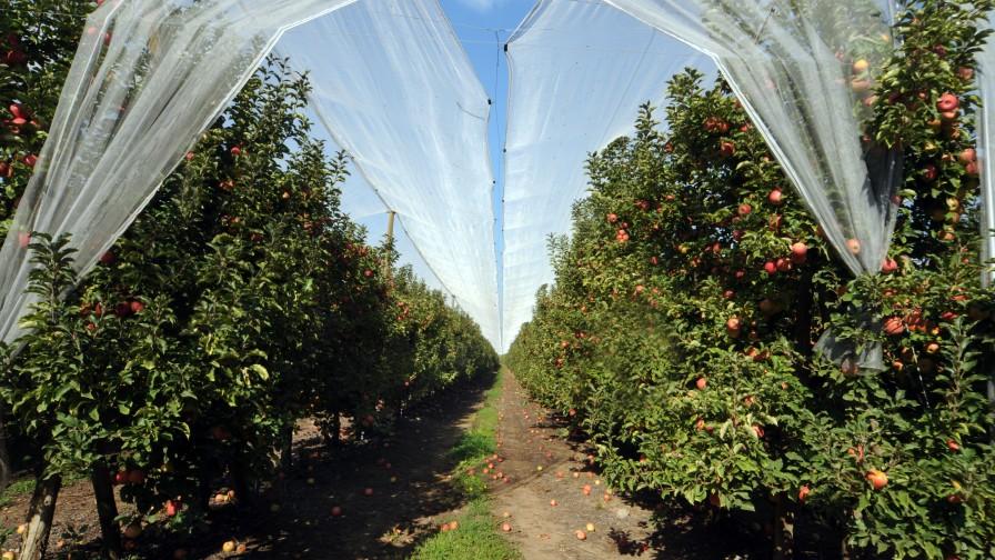 árboles de manzanas
