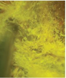 Eriófidos: factores influyen en su presencia y cómo controlarlos