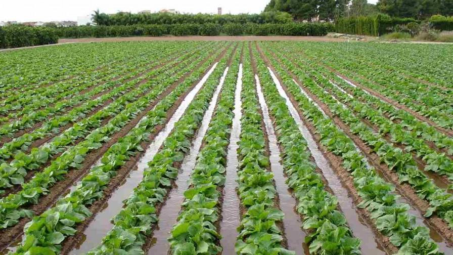 Firman acuerdo para promover agricultura hídricamente sustentable