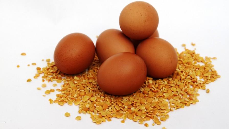 Huevos Omega-3 desarrollados en La Araucanía logran buena recepción en el mercado