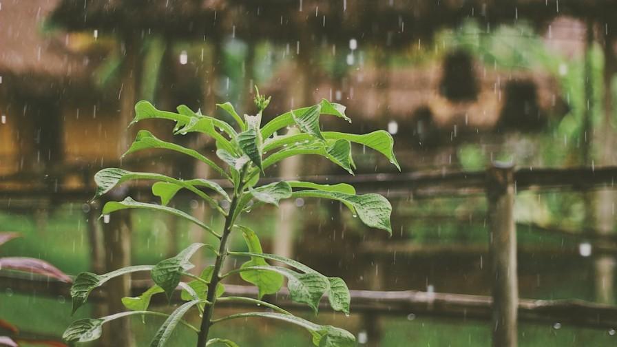 ¡Volvieron las lluvias!