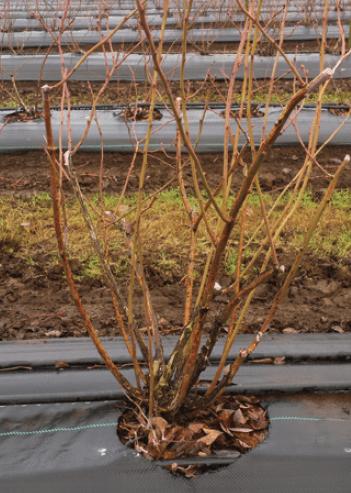 Pocas pero vitales: labores para el invierno