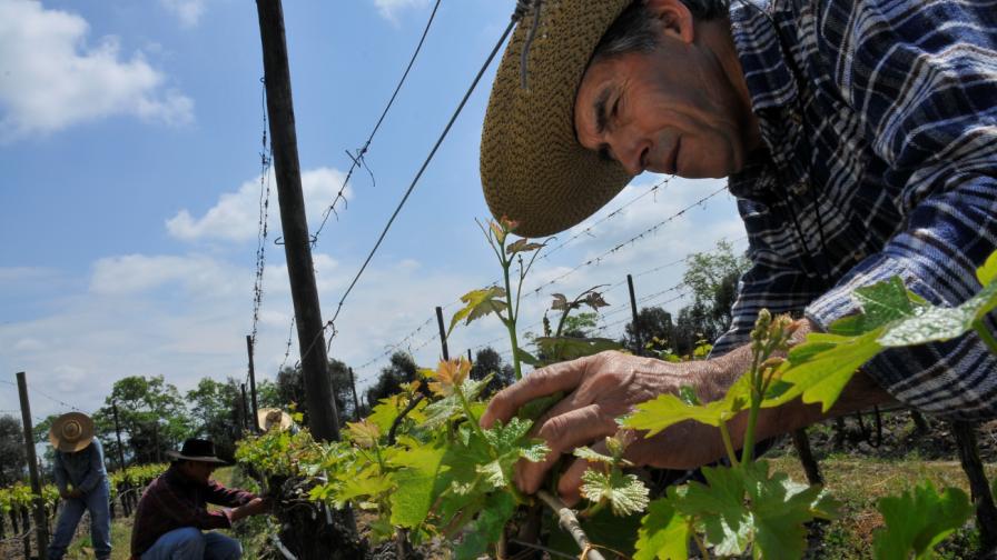 Miguel Torres Chile celebra 10 años de compromiso con Comercio Justo