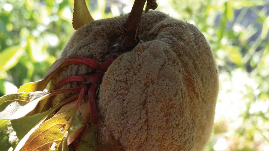 Resistencia a fungicidas: consideraciones para prevenirla o retardarla