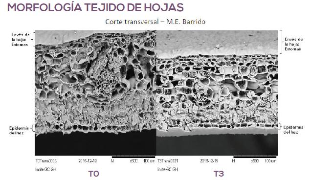 Células reformadas: beneficios de fertilizantes con un alto contenido de silicio