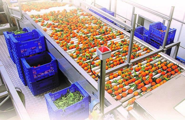 Soluciones AgroFresh para la desinfección de frutas, hortalizas y centrales hortofrutícolas
