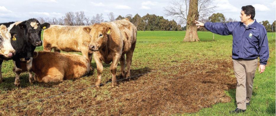Calidad: el factor común en el diverso mapa de carnes de vacuno en Chile