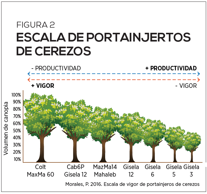 Origen del éxito: Guía completa para la plantación de cerezos