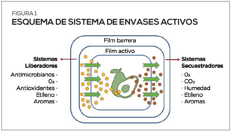 Envases activos e inteligentes: una alterativa viable y efectiva para controlar pudriciones