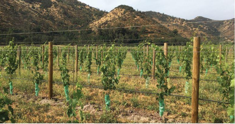 El programa de plantaciones de Viña Santa Rita para viñedos sustentables y de calidad