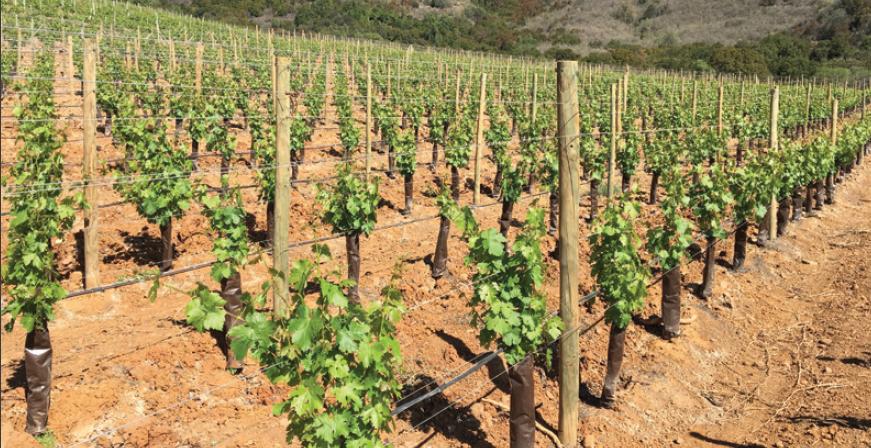 La nueva generación: características de los nuevos diseños de viñedos
