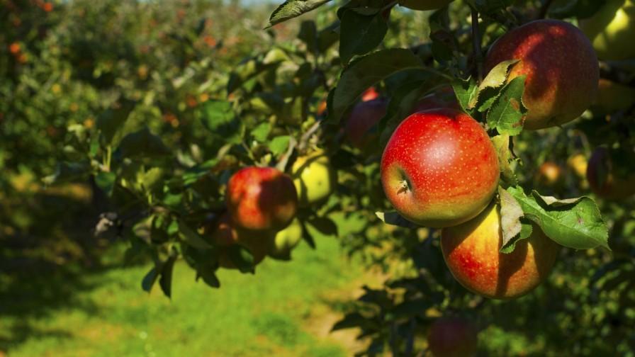 AgroFresh presentó los resultados de Harvista™