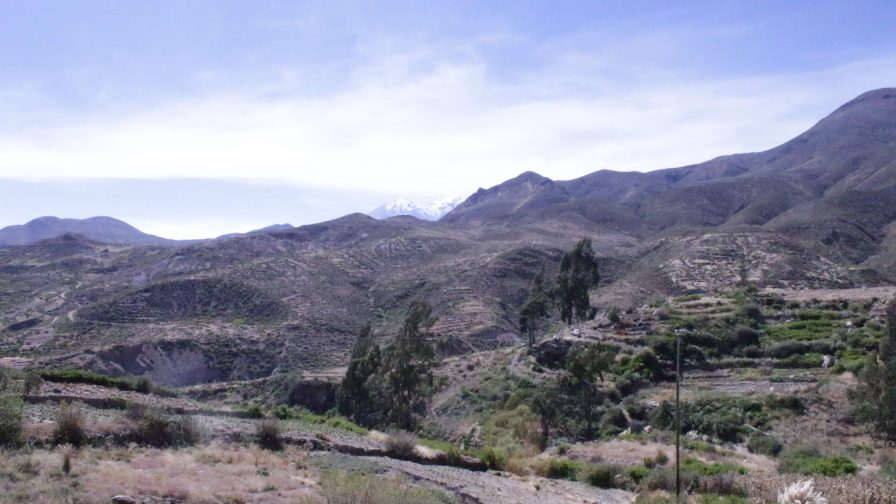 Microorganismos en el desierto de Atacama: base para generar bioproductos