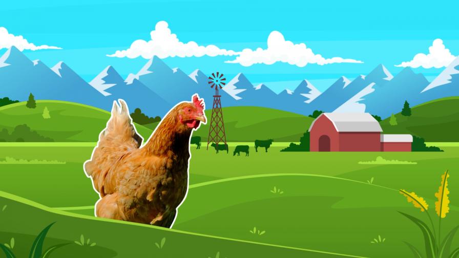 Campoavisos.cl es el nuevo sitio que promueve e impulsa el mundo agrícola