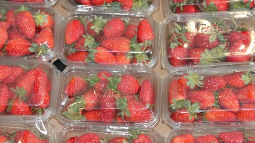 Packaging: la clave para asegurar calidad e inocuidad de los alimentos