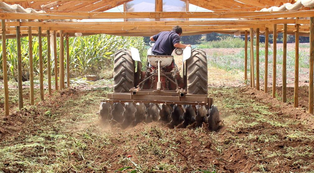 La biofumigación como alternativa sustentable para la desinfección de suelos
