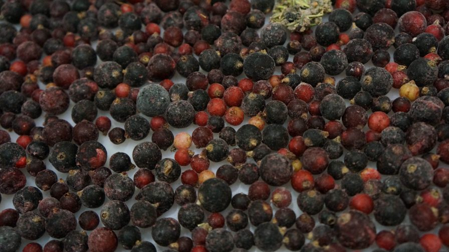 Automatización: el gran aporte para el creciente mercado de berries en Chile