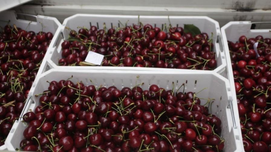 Se suma Vietnam a los mercados asiáticos de exportación para cerezas chilenas