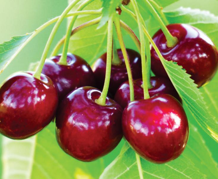 Principales fitohormonas que actúan en el desarrollo de la cereza
