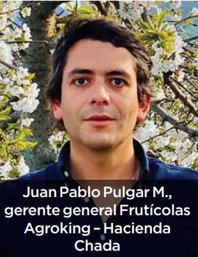 Río King: desafíos en la producción y exportación de cerezas
