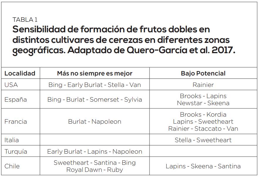 Formación de frutos dobles en cerezos: causas y manejos para evitarlo