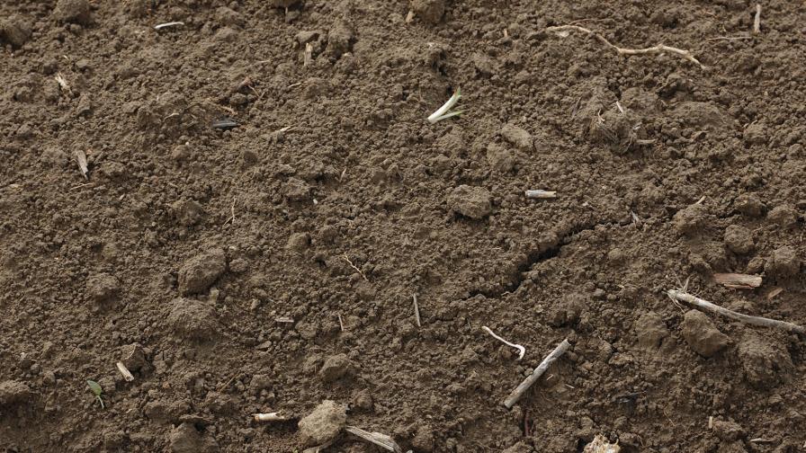 Hongos que le dan vida al suelo: el mejor aliado de los cultivos