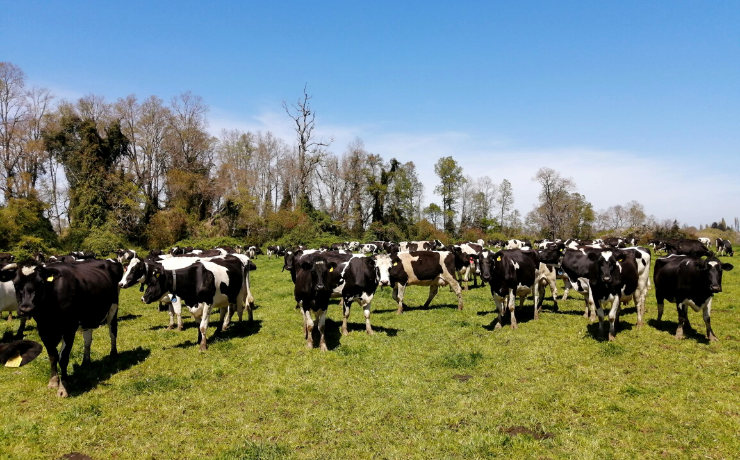 Balance de carbono en predios agrícolas y ganaderos contribuirá con carbono neutralidad