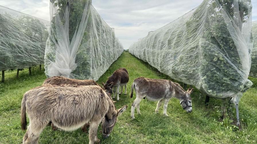 Agricultura regenerativa para recomponer la vida de los suelos productivos