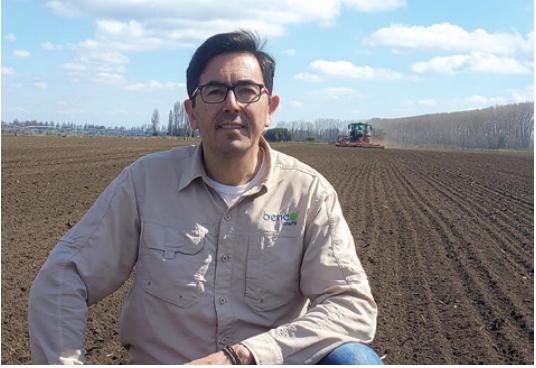 Beneo Orafti: con innovación mejoran producción y calidad de achicoria industrial en Chile