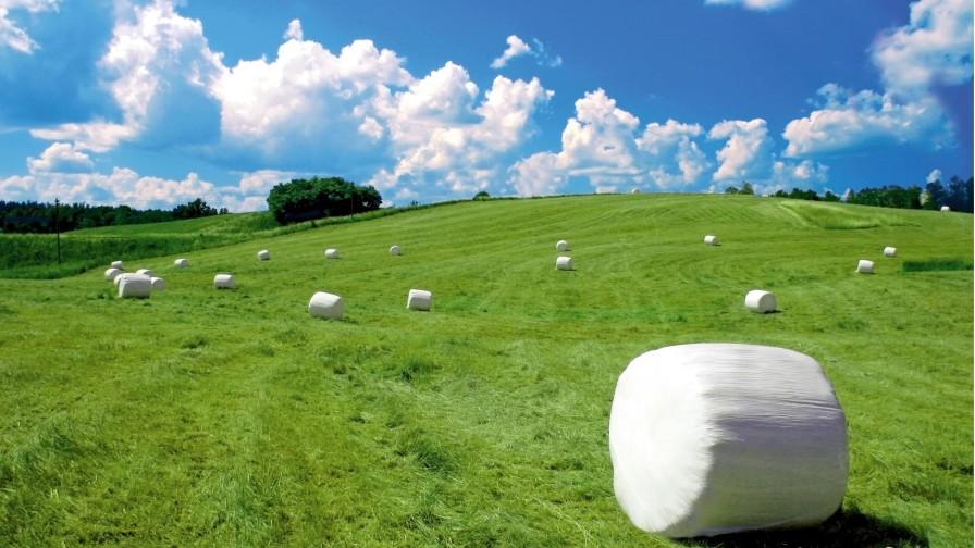 Efecto de ensilar pulpa de remolacha para vacas lecheras a pastoreo y la influencia de aditivos