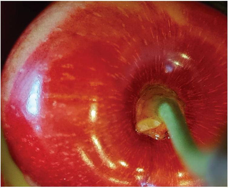 Evaluación de herramientas precosecha para el control de Drosophila Suzukii en cerezos