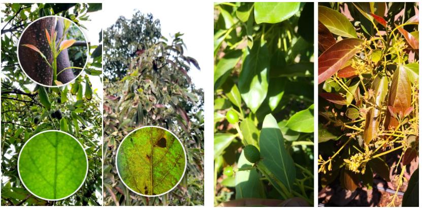 Agrocare: un salto a lo natural con trece productos biodinámicos