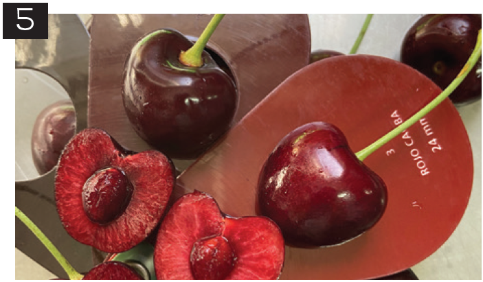 Principales variedades de cerezas: su comportamiento durante la postcosecha