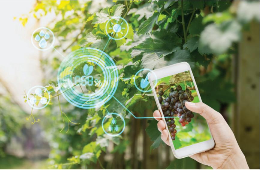 La importancia de la gestión de datos para una agricultura más inteligente