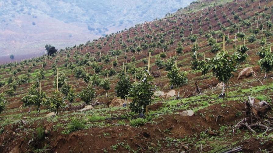 CAZALAC presenta estudio que evalúa impacto medioambiental del cultivo de palta en Chile
