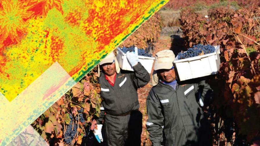 Nuevo sistema inteligente pronóstica rendimiento de cosecha en la industria vitivinícola