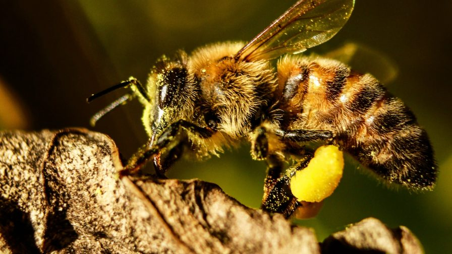 Qué valor le asignamos a la acción polinizante de los insectos
