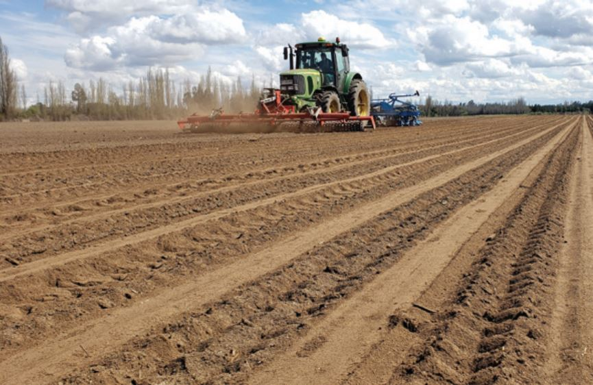 Polo territorial de granos ancestrales: desarrollo de un paquete tecnológico para quínoa