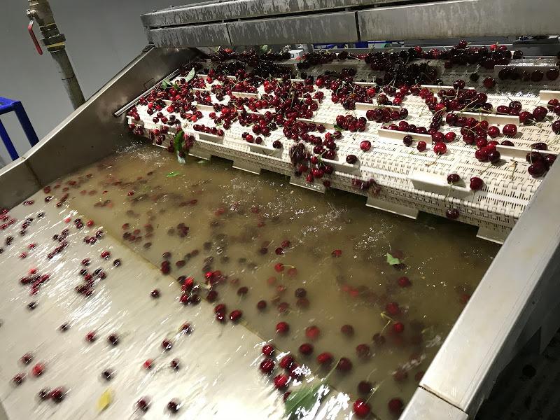 Análisis: Aciertos y desaciertos de la temporada 2020-2021 de cerezas