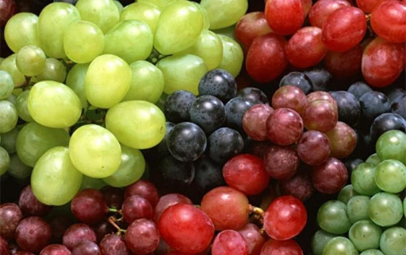 Exportaciones de uvas de mesa disminuirían 12% respecto a temporada anterior
